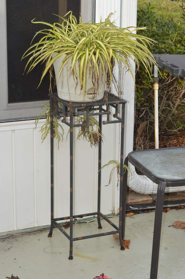 Lot # 210 Spider plant in pot w/ plant stand (main image)
