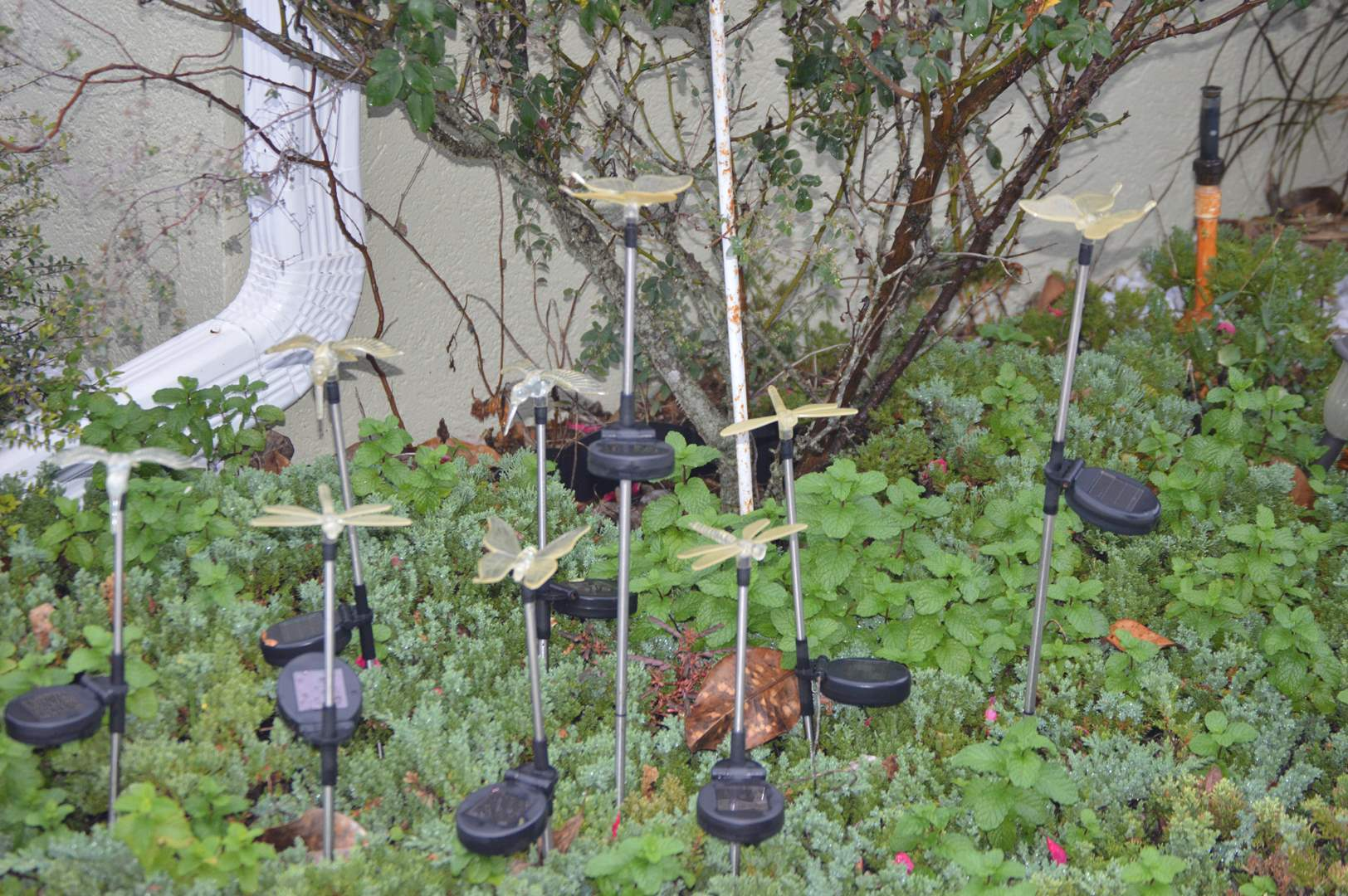 Lot # 239 Solar powered lights - Hummingbirds, butterflies & dragonflies (main image)