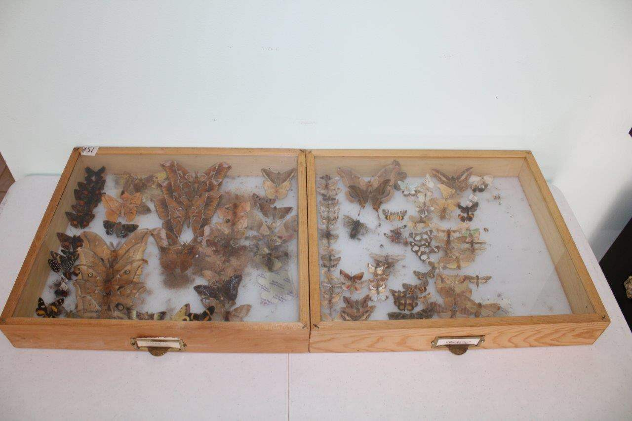 """Lot#51 Butterfly Collection in 2 Wood & Glass Display Cases 19"""" x 16.5"""" x 3.5""""h  (main image)"""