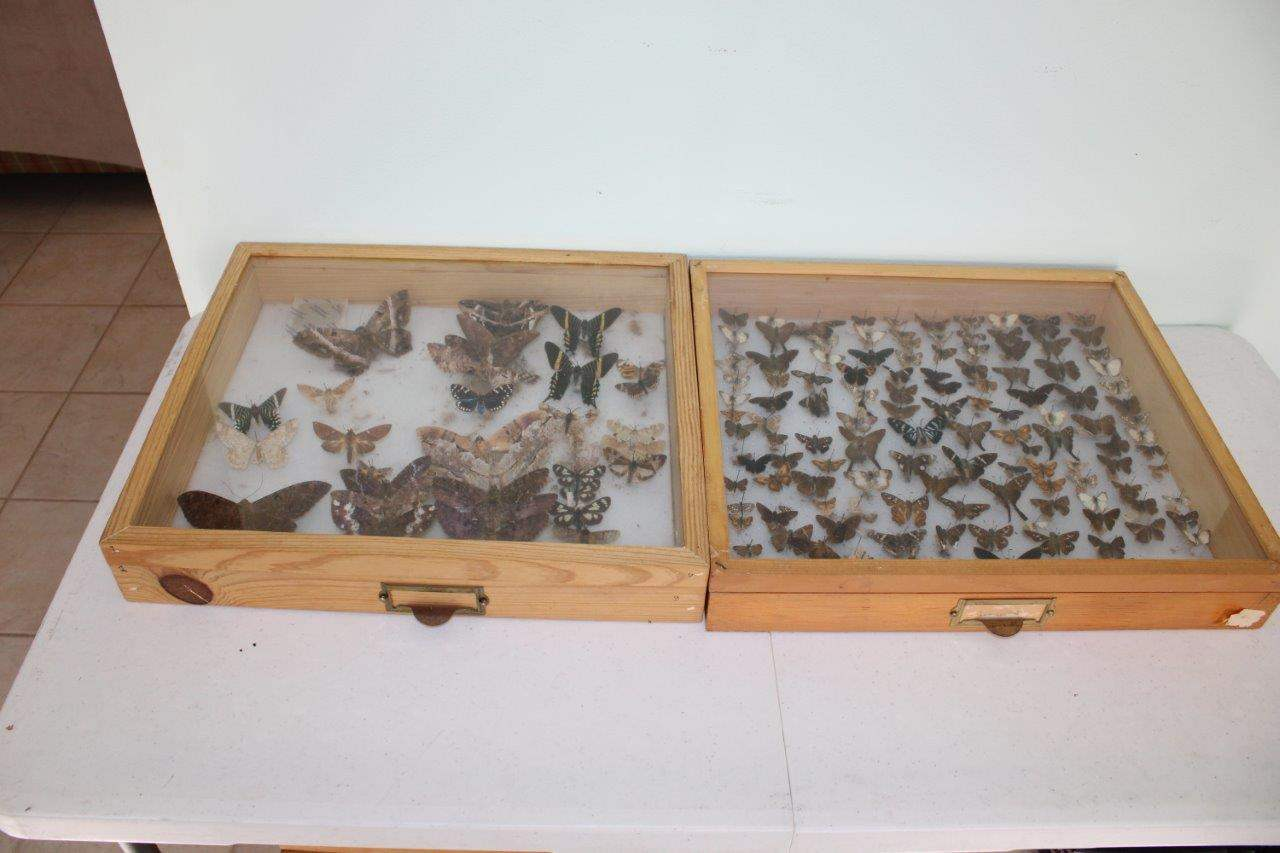 """Lot#65 Butterfly Collection in 2 Wood & Glass Display Cases 19"""" x 16.5"""" x 3.5""""h (main image)"""