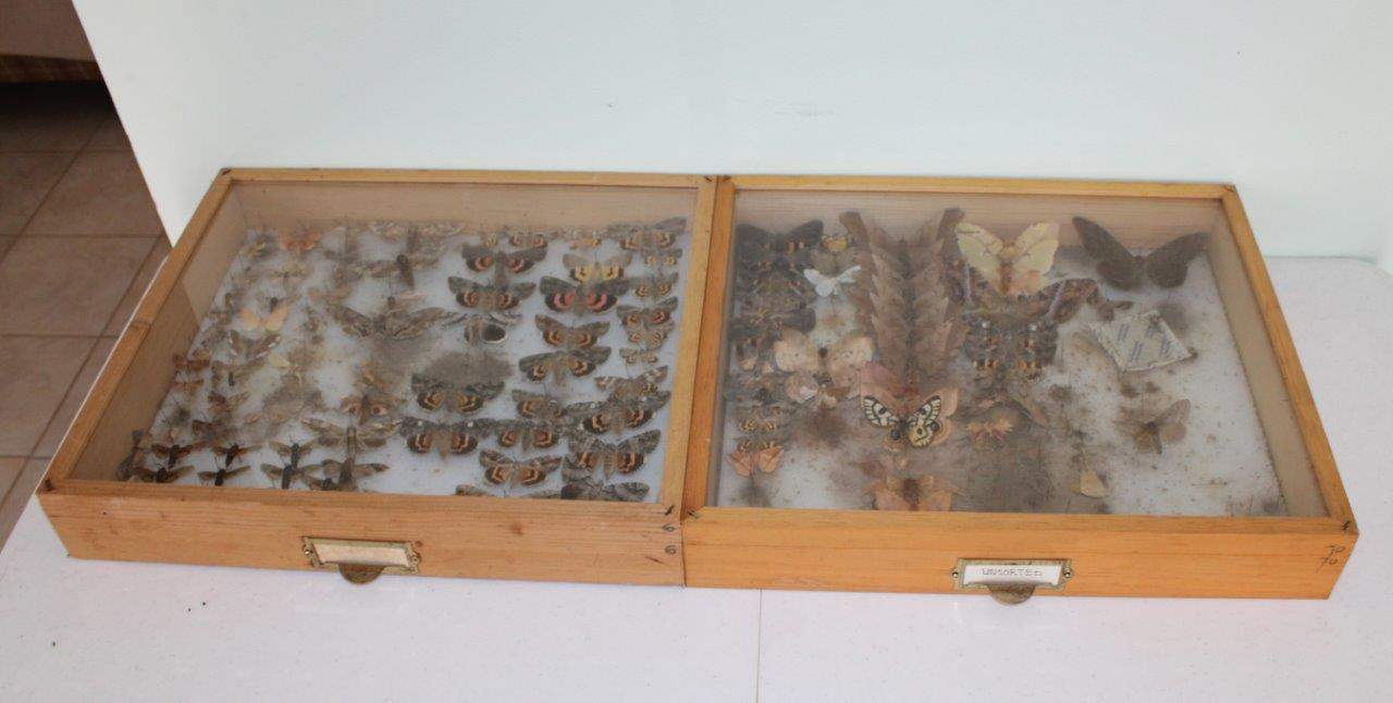 """Lot#66 Butterfly Collection in 2 Wood & Glass Display Cases 19"""" x 16.5"""" x 3.5""""h (main image)"""