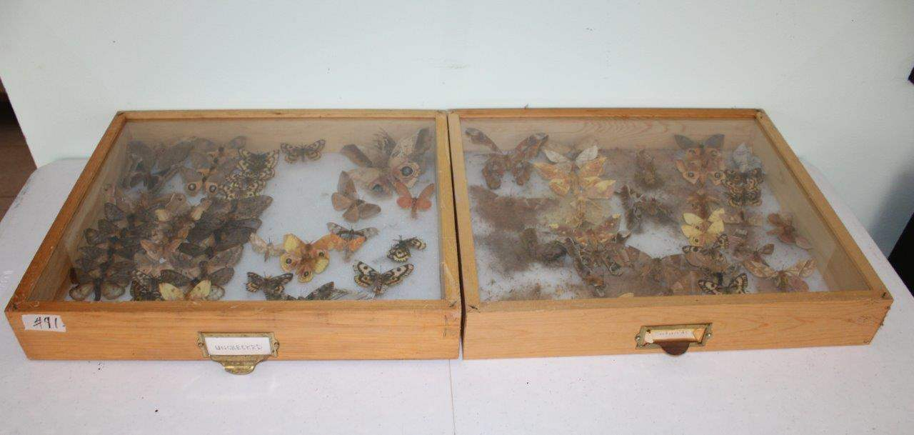 """Lot#91 Butterfly Collection in 2 Wood & Glass Display Cases 19"""" x 16.5"""" x 3.5""""h (main image)"""